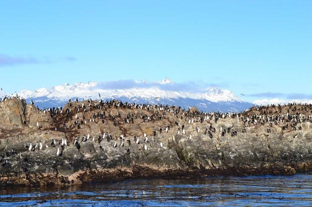Foki i góry, czyli dzika przyroda południowego krańca Argentyny (fot. Paweł Majkut)