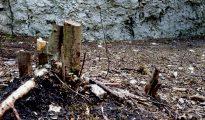 Wycinka pod skałami można robić, ale z rozsądkiem i w zgodzie z przepisami (fot. Nasze Skały)